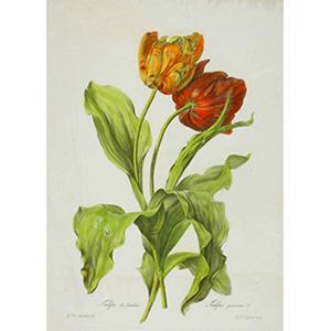 Bloemen Van Spaendonck